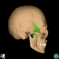 Skull - lateral - sphenoid