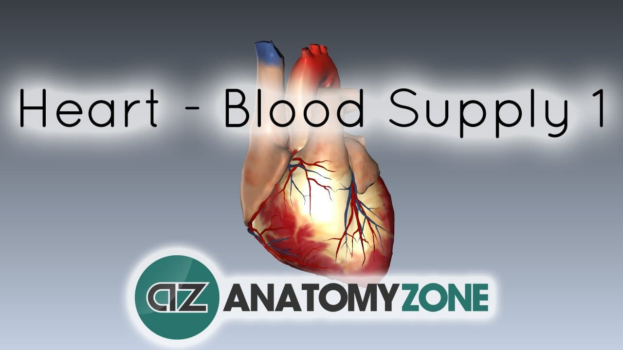 Blood Supply to the Heart • Cardiovascular • AnatomyZone