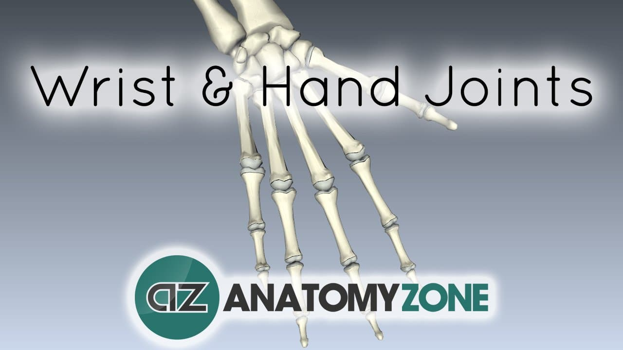 Joints of the Wrist and Hand • Musculoskeletal, Skeletal • AnatomyZone