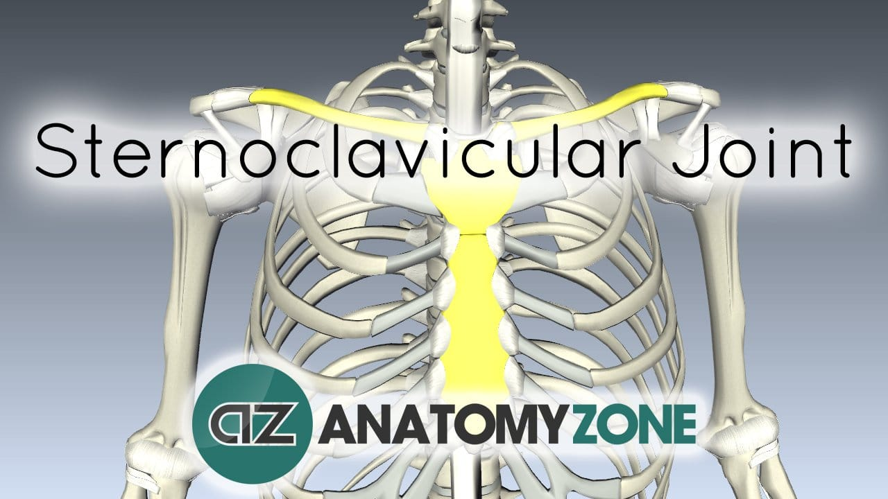 Sternoclavicular Joint • Musculoskeletal, Skeletal • AnatomyZone