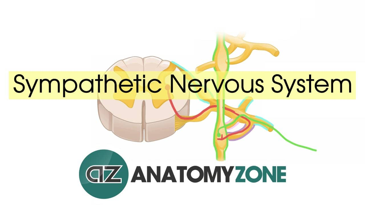 the eye and nervous system questions Do you want to know about nervous system then take this quiz and learn more about this.