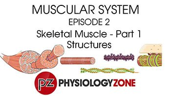 PhysiologyZone - Episode 2