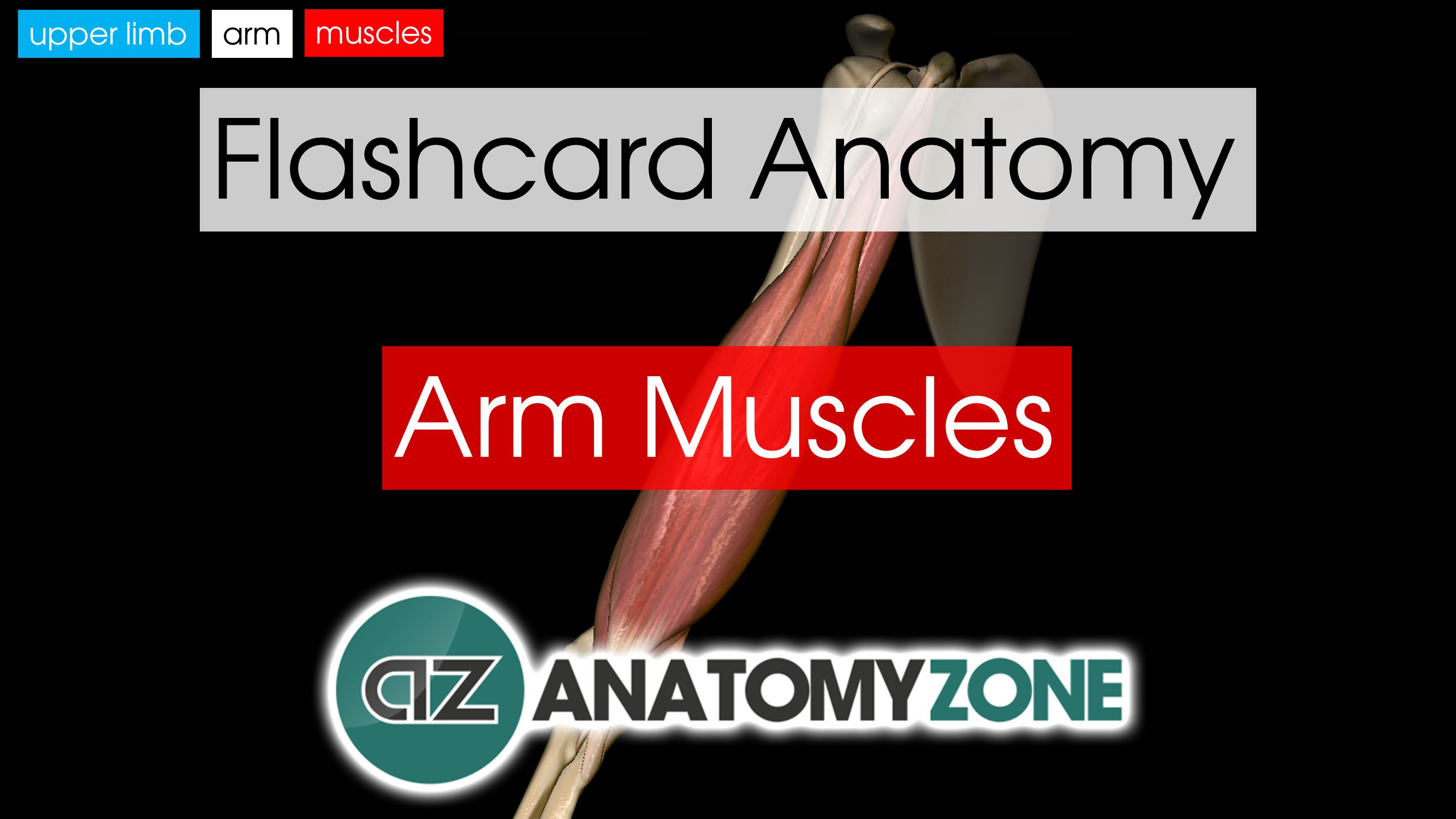 Muscles Of The Hand Anatomyzone