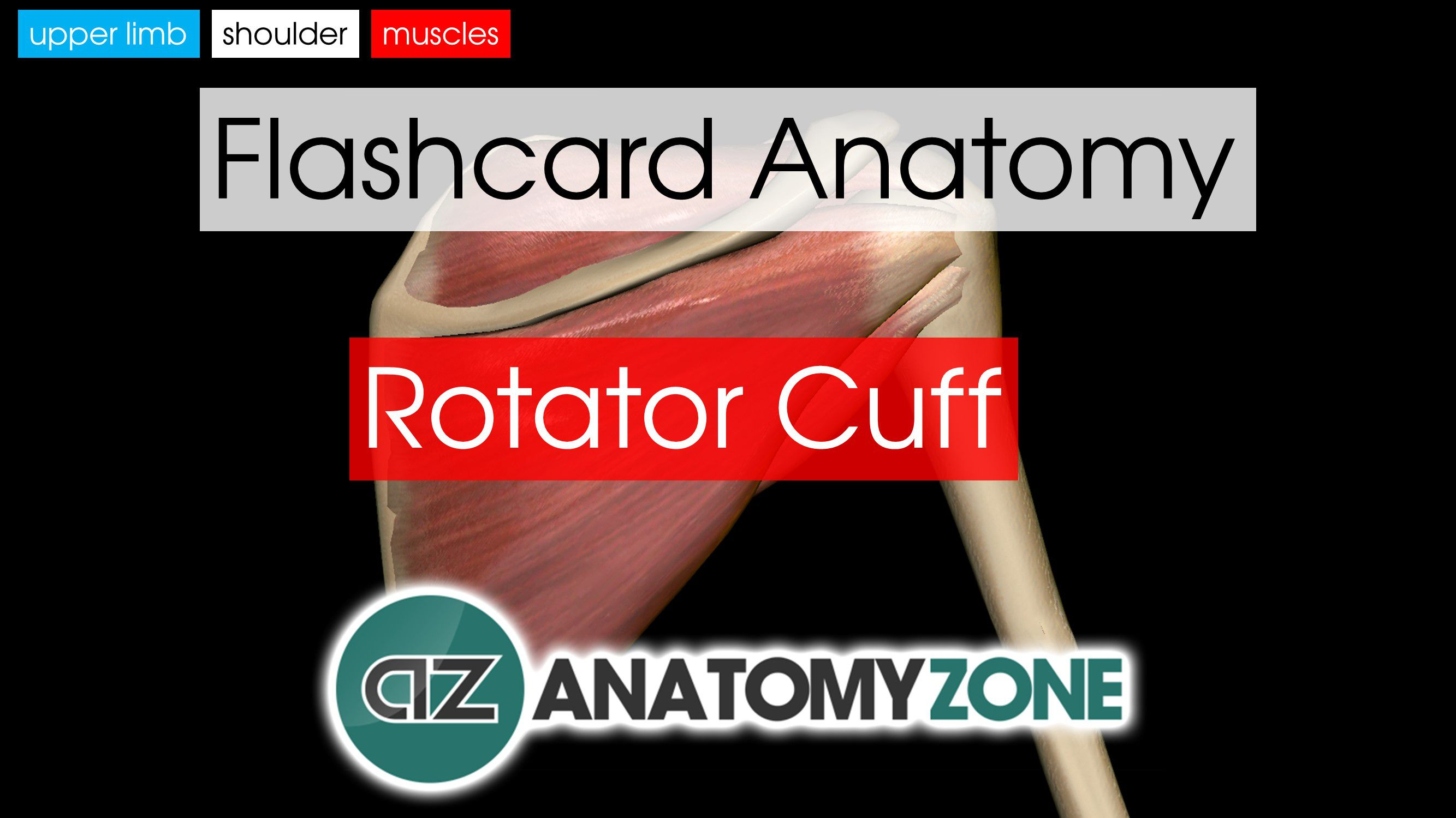 Muscles of the Hand | AnatomyZone
