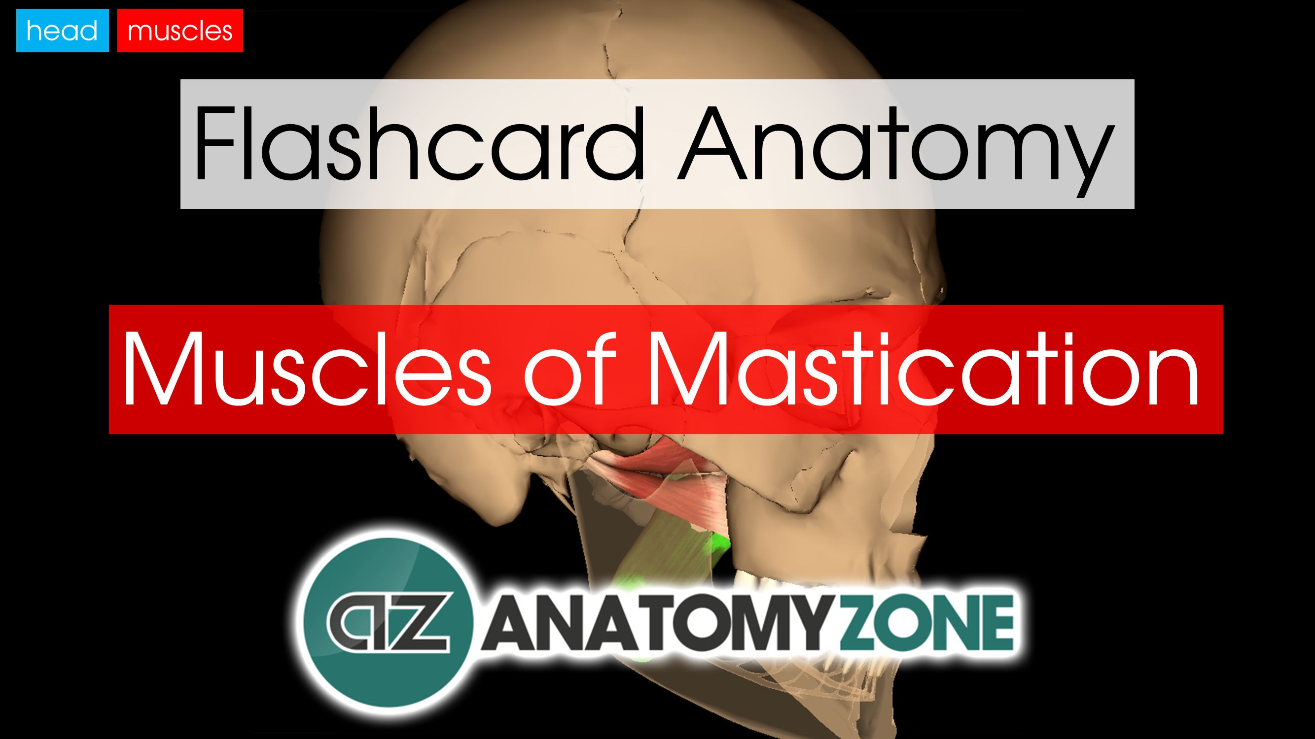 Muscles of Mastication | AnatomyZone