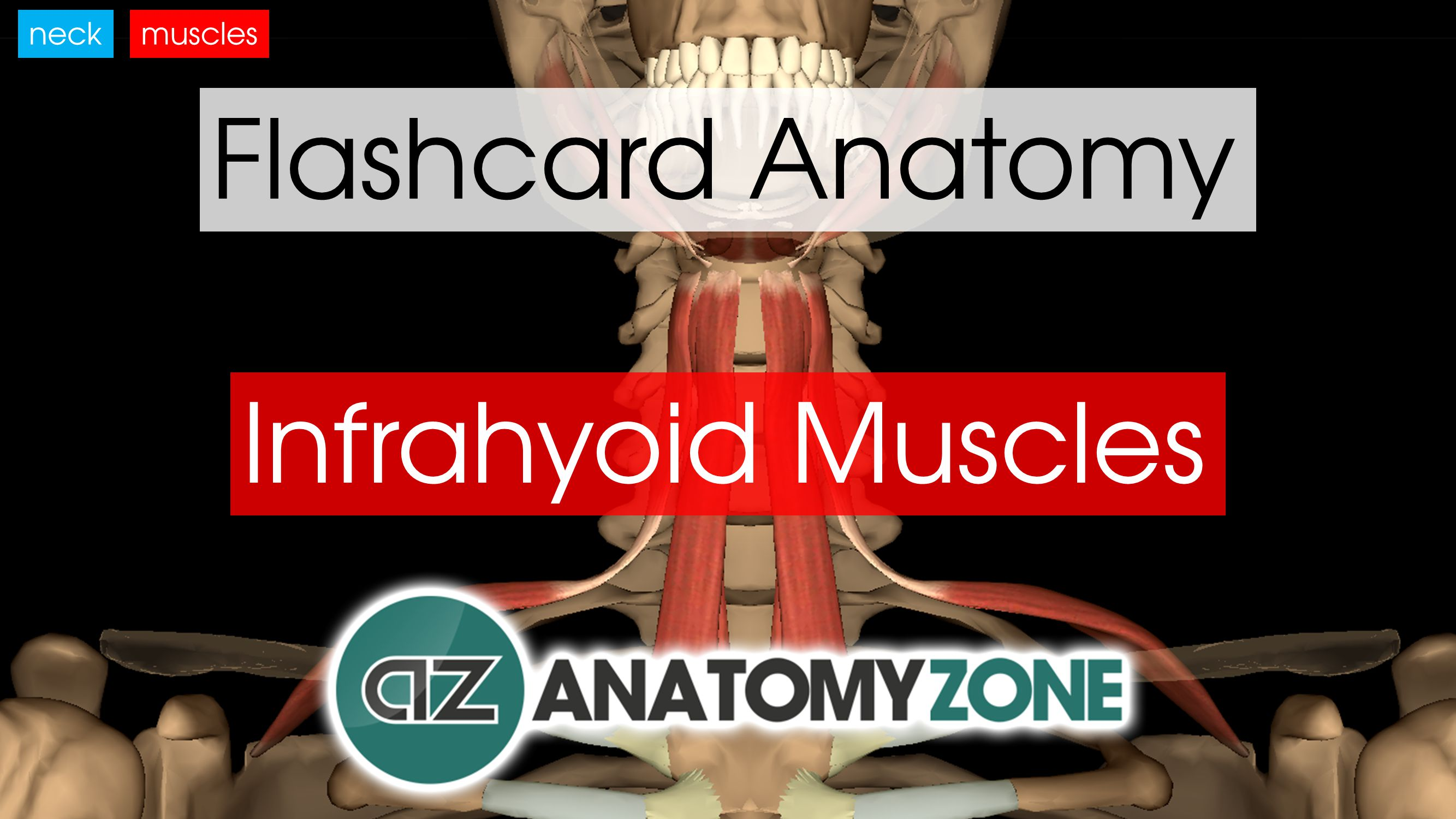 Infrahyoid Neck Muscles | AnatomyZone