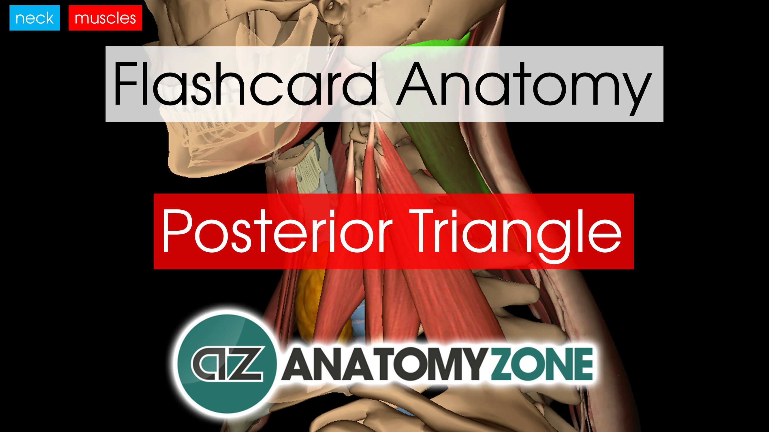 Flashcards • AnatomyZone