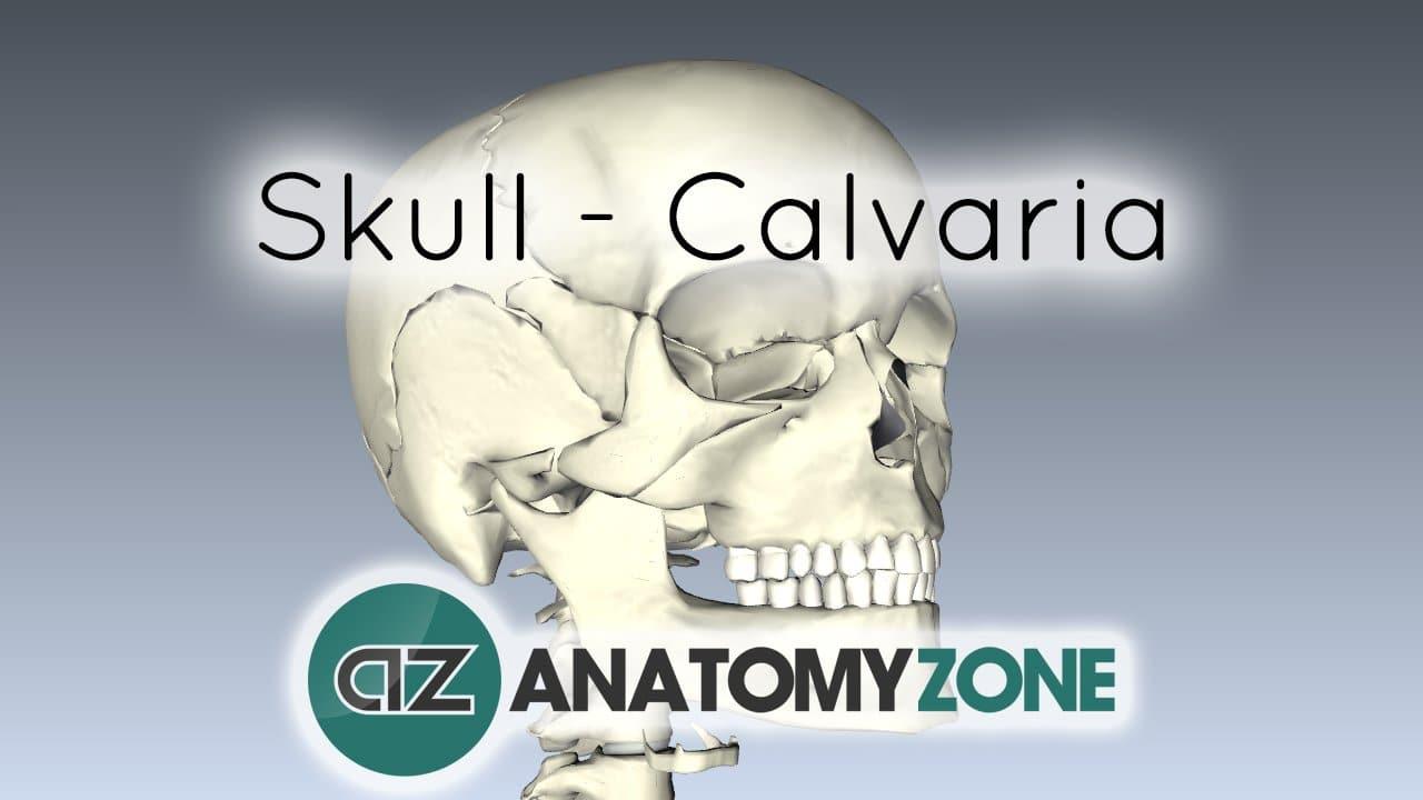 Skull tutorial - Bones of the Calvaria