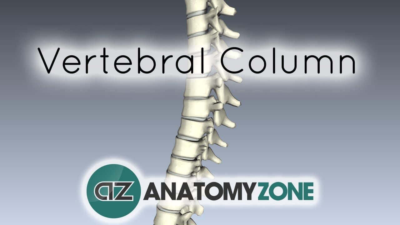 Spine tutorial - Vertebral Column