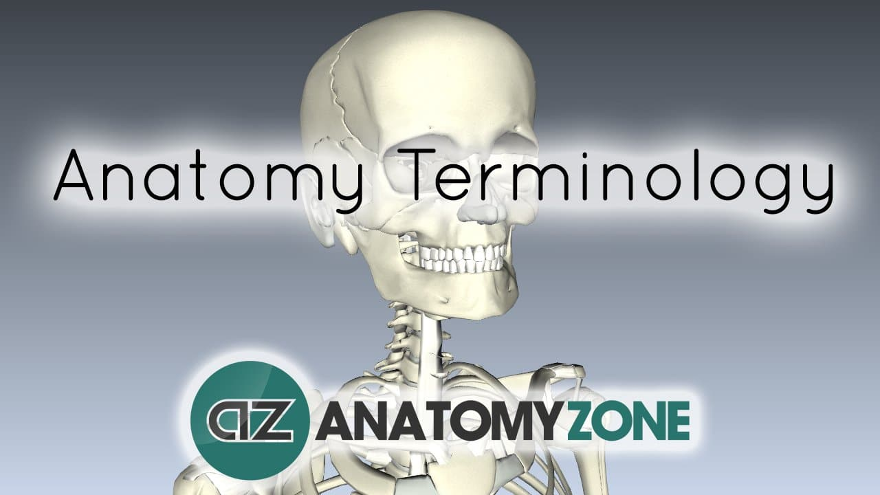 anatomy terminology