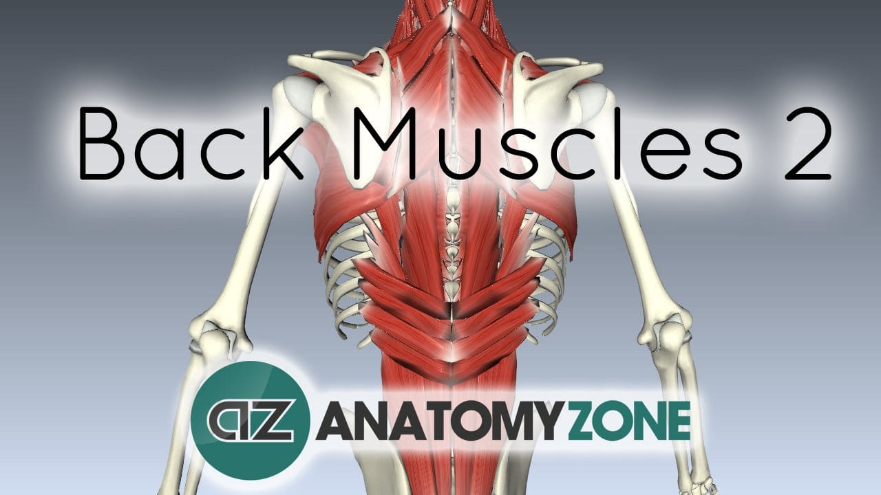 Intermediate and Deep Muscles of the Back