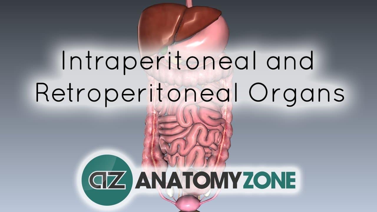Peritoneal Cavity - Part 4 - Intraperitoneal and Retroperitoneal Organs
