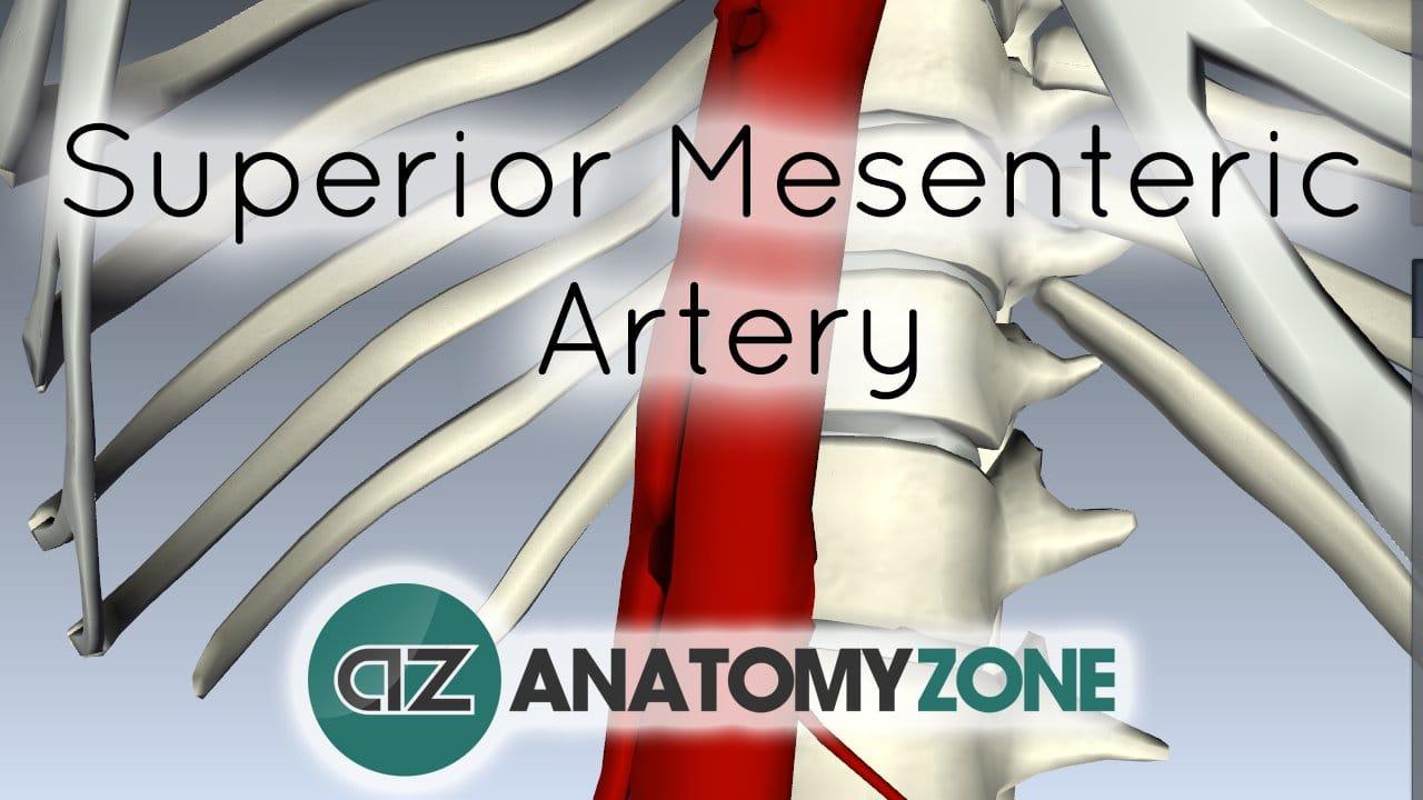 Superior Mesenteric Artery