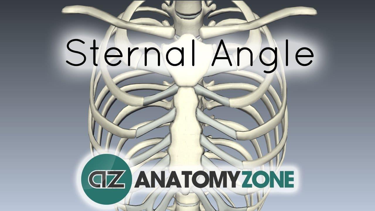 Sternal Angle - Angle of Louis
