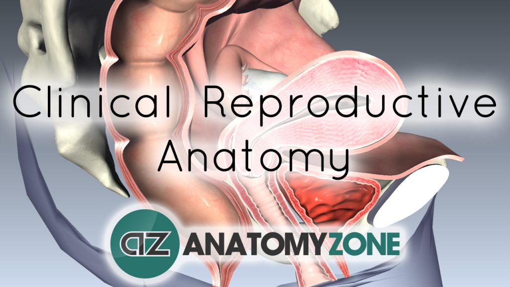 Female Clinical Reproductive Anatomy