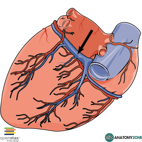 Coronary Sinus