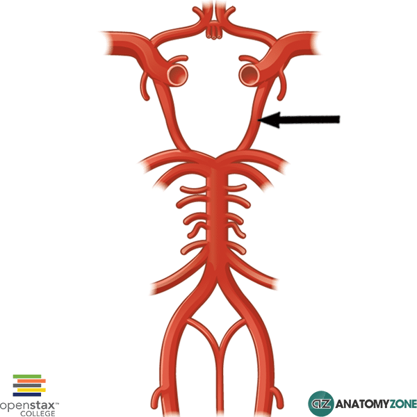 Posterior Communicating Artery